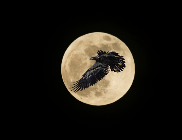 Moon and Eagle