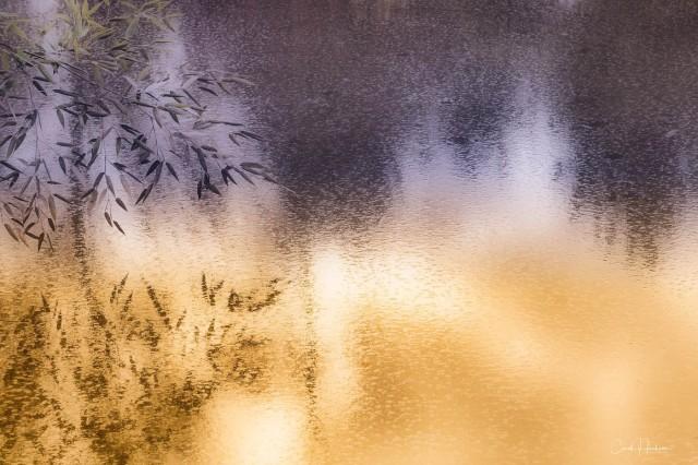 Pond Reflection - Carol Jackson