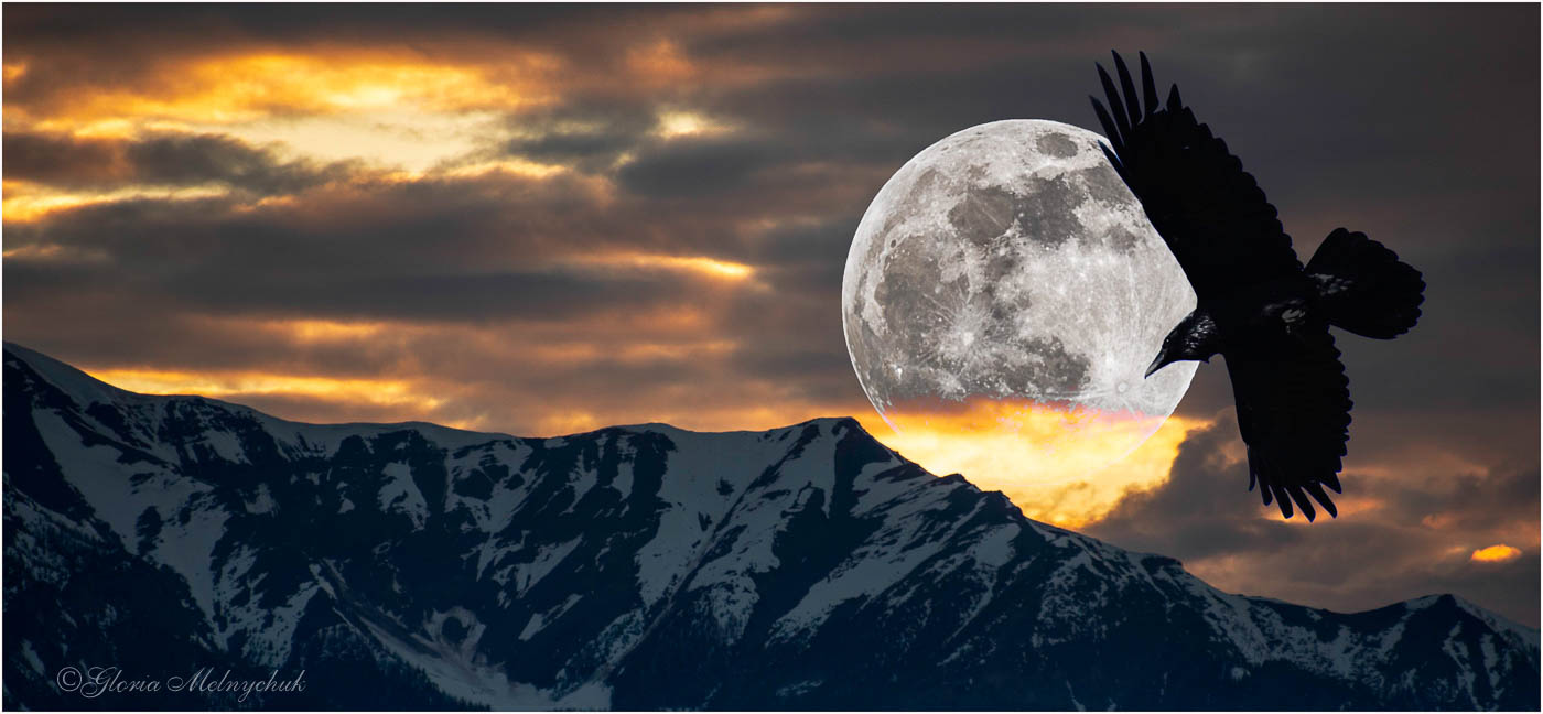 Raven Over the Moon - Gloria Melnychuk