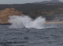 Whale Breech - Doug Boyce