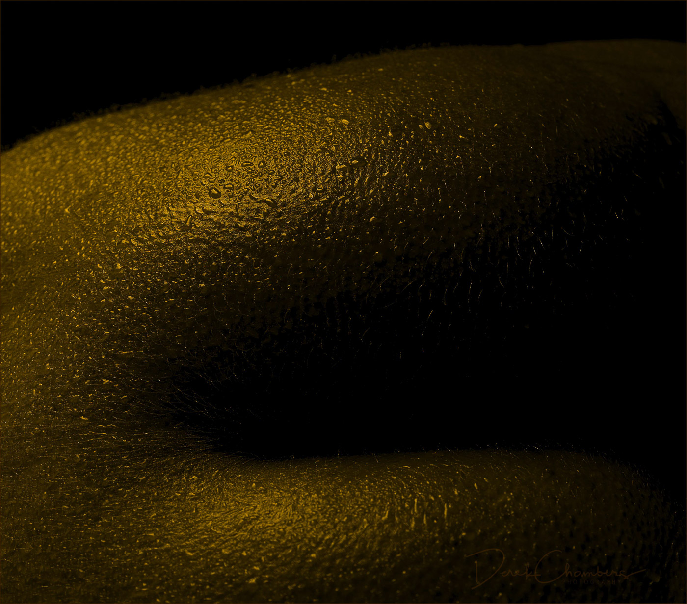 Golden Bodyscape - Derek Chambers