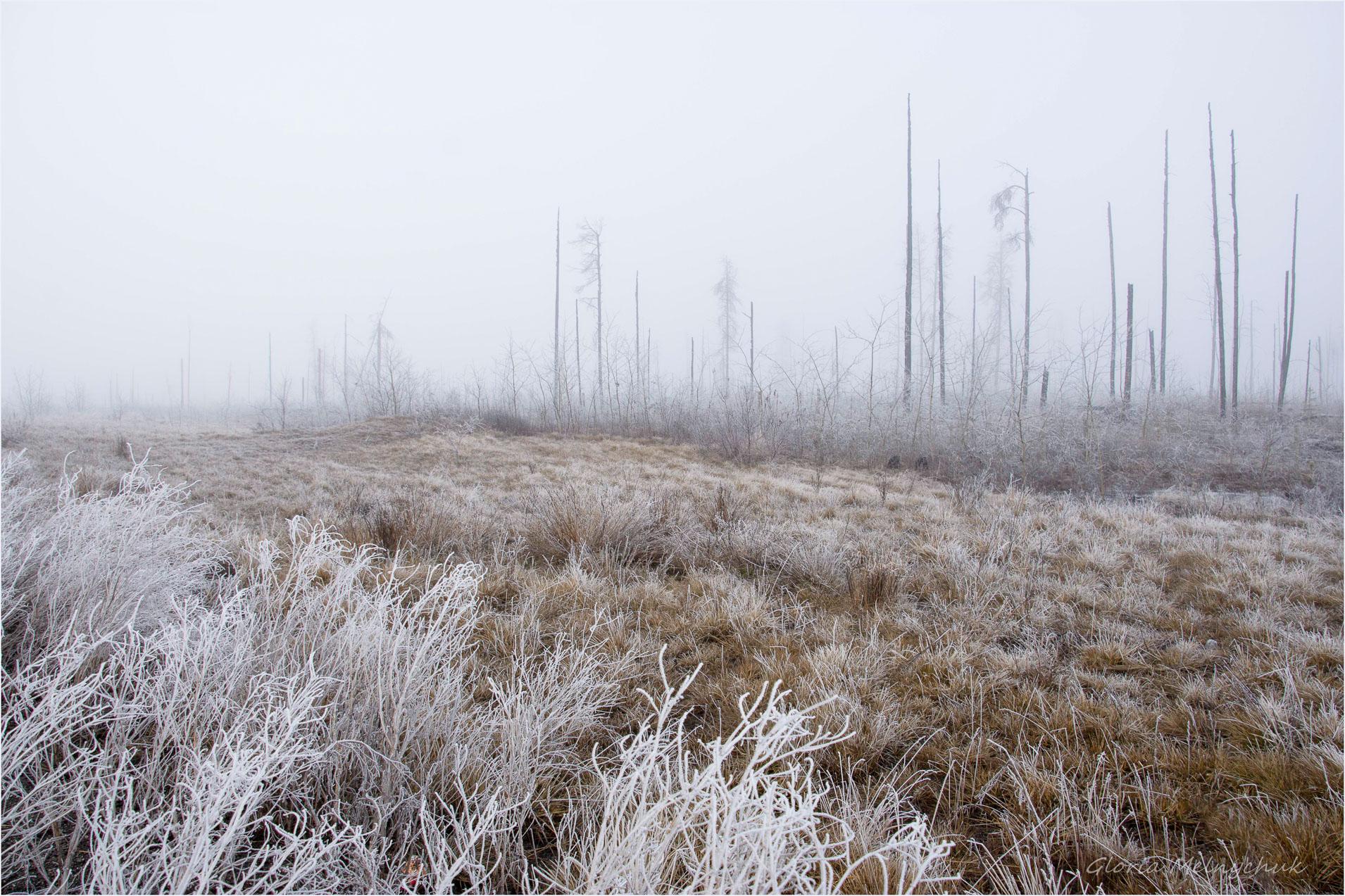 Into the Mist - Gloria Melnychuk
