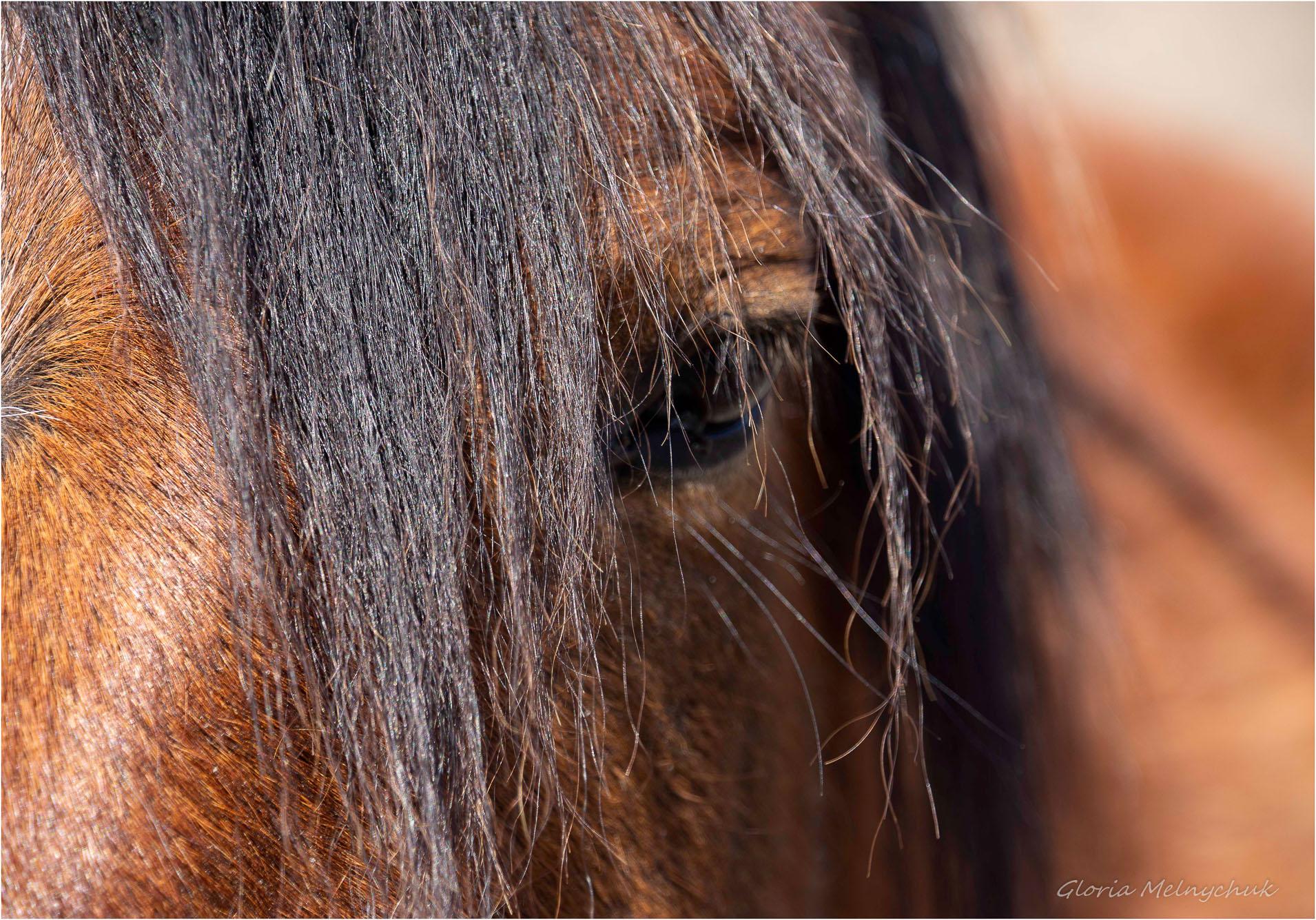 One from the Herd  -  Gloria Melnychuk