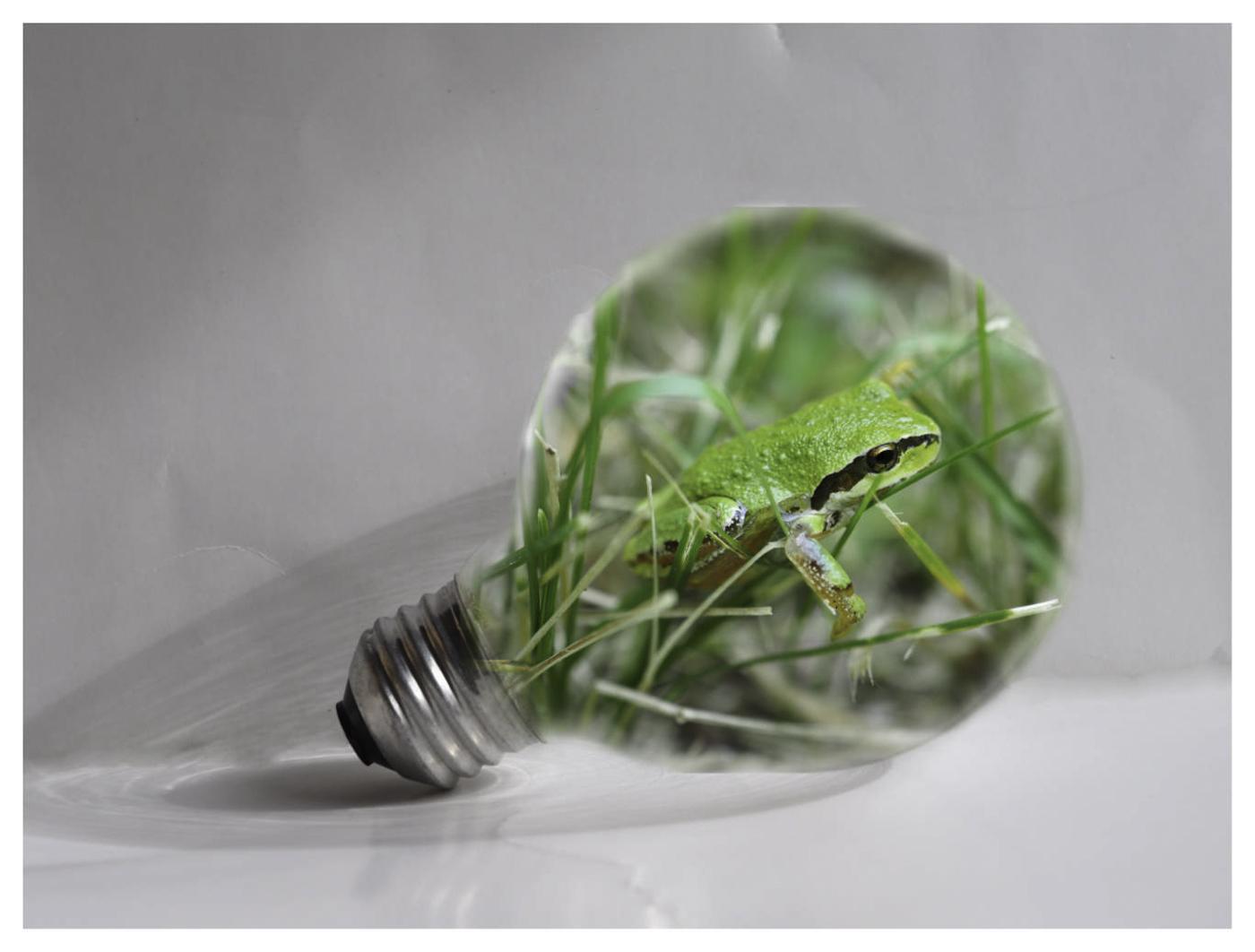 Frog in a Light Bulb - Kevin Haggkvist