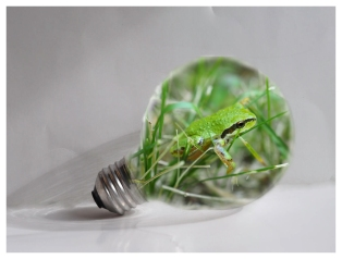 Frog in a Light Bulb - Kevin Haggkvist