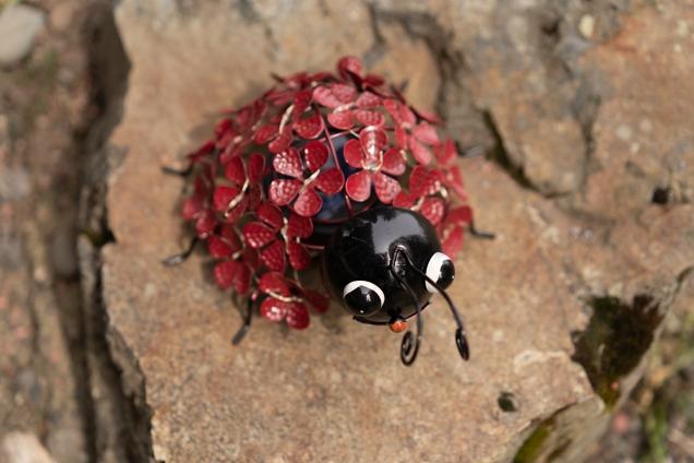 19 Bug - Derek Chambers