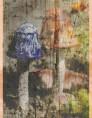 # 20 fungi AnnMarie Brown