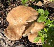 #20 Fungi - Derek Chambers