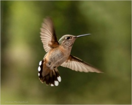 21 Bird in Flight - Gloria Melnychuk