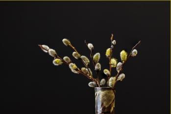 23-Scavenger Hunt 2019-Pussy Willows - © Sharon Jensen