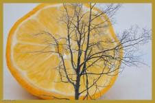 #24 center of Fruit - AnnMarie Brown