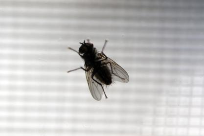 Bug 19 - Doug Boyce