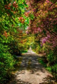 Darts Hill Garden South Surrey-CJJ