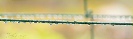 17 Water Droplets - Raindrops keep fallin' ... - Derek Chambers
