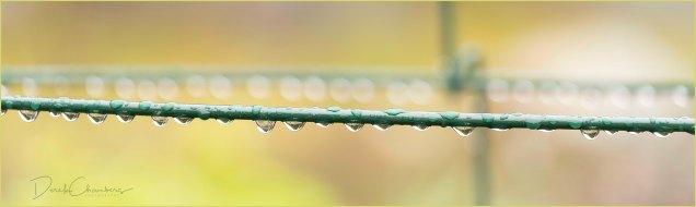 17 Water Droplets - Raindrops keep fallin' ... - Derek Chambers