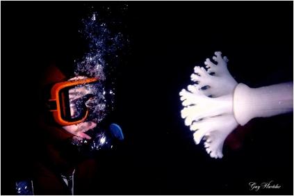Diver and Plumose Anenome - Gary Hardaker