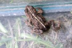 Living Frog 01 Doug Boyce