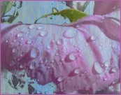 #17 water droplets AnnMarie Brown