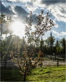 18 Sun Rays - Gloria Melnychuk