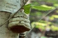 20 Fungi - Gloria Melnychuk