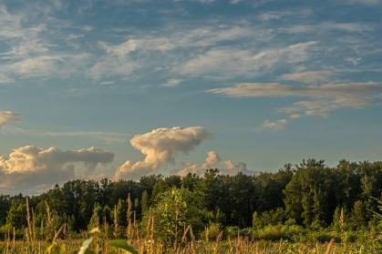 22-Cloud Formation Bird-CJJ