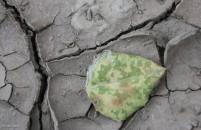 # 38 cracks in dry earth AnnMarie Brown