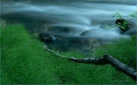 Stream Side Mares Tail - Eakin Creek PP - Derek Chambers