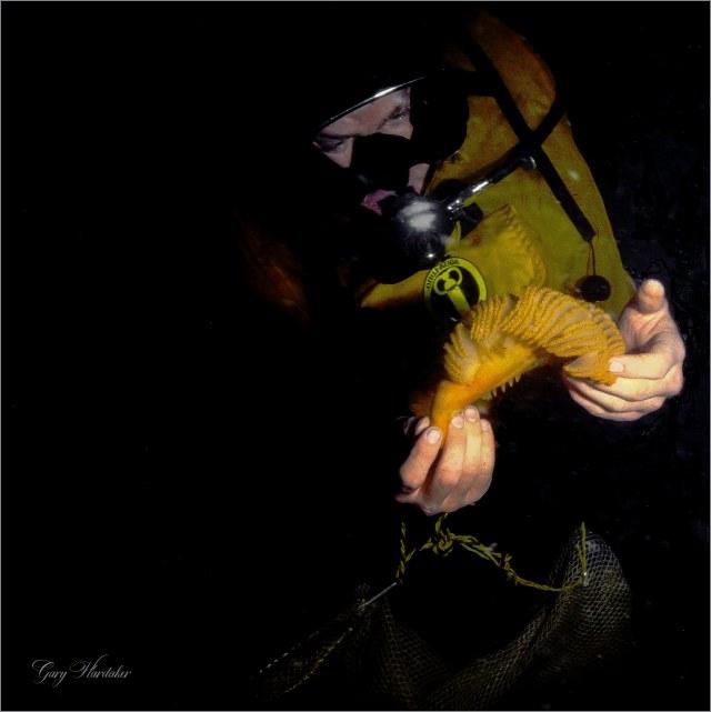Diver holding Sea Pen- Gary Hardaker