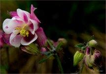 Purple Perennial- Gary Hardaker