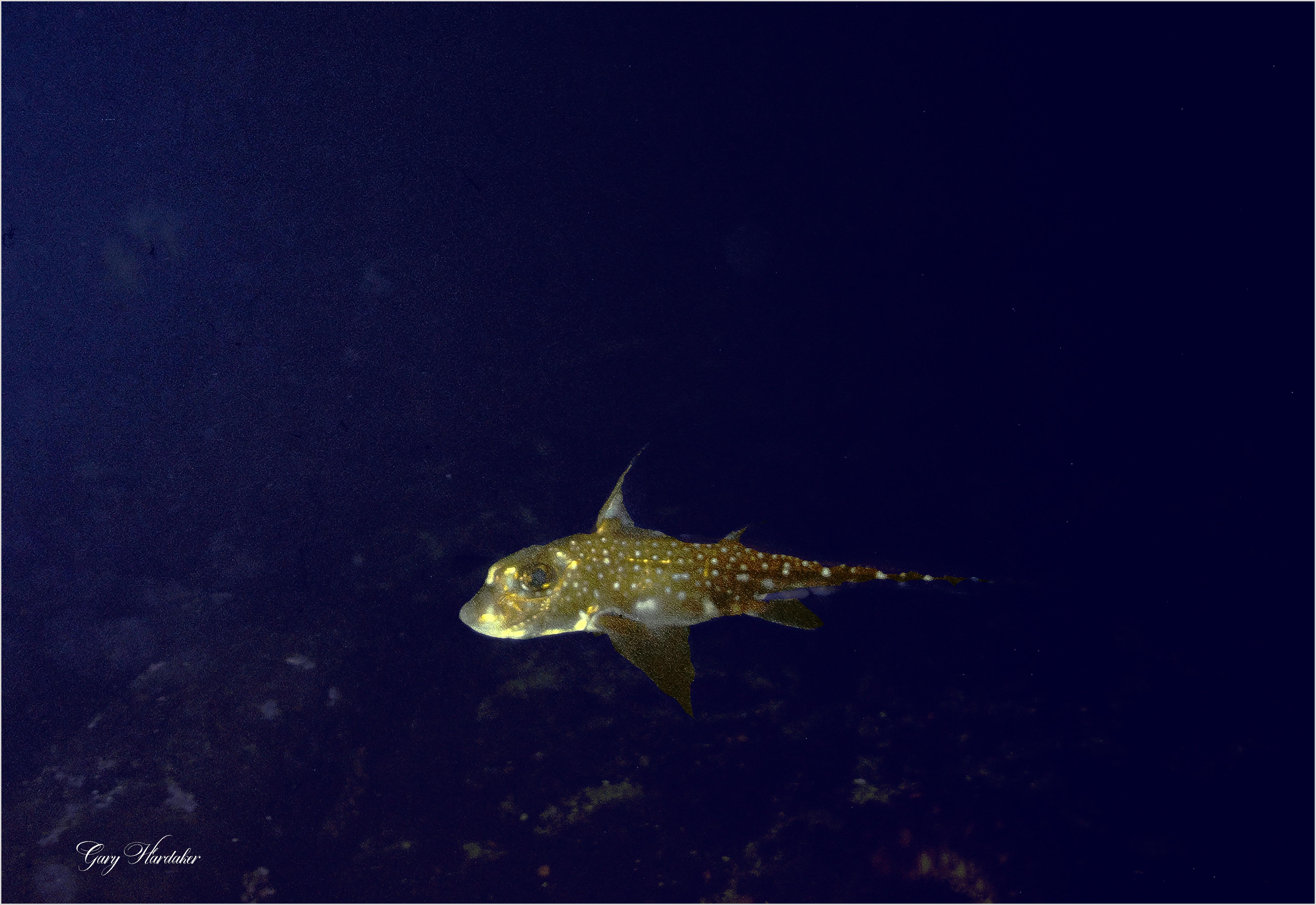 Ratfish- Gary Hardaker