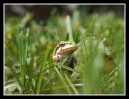 Scavenger Hunt #1 Close up of frog,K Haggkvist