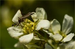 Scavenger Hunt #14 Bokeh - Saskatoon Blossom Visitor - DMHopp