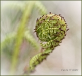 Scavenger Hunt #35 Spiral - Fern Unfurling - DMHopp