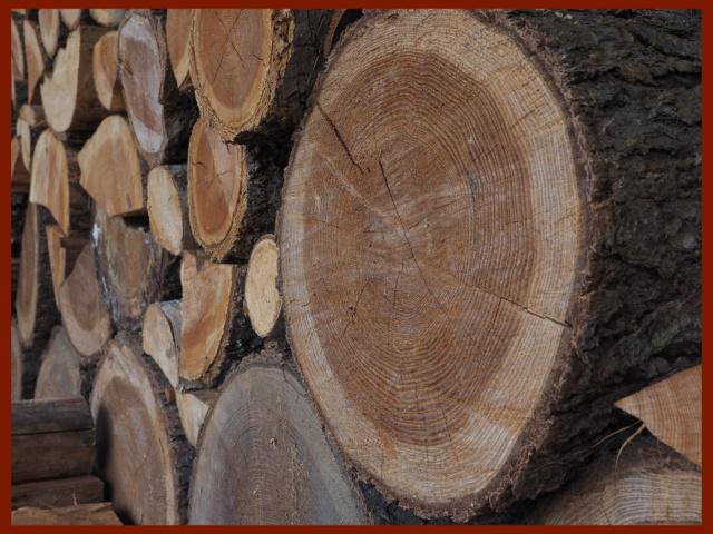 Scavenger Hunt #36 TreeRings,K.Haggkvist