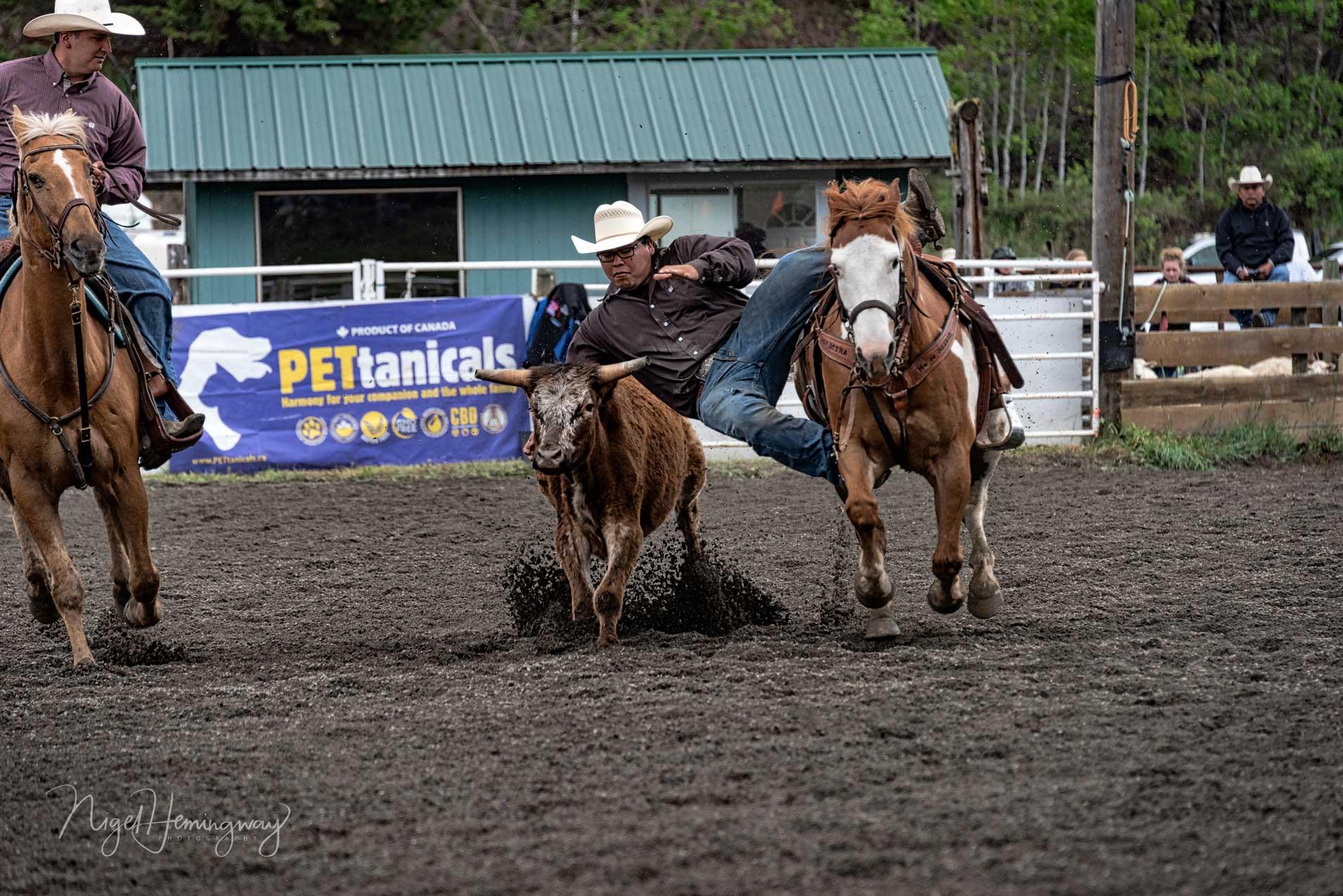 Steer-Wrestling-1 - Nigel Hemingway