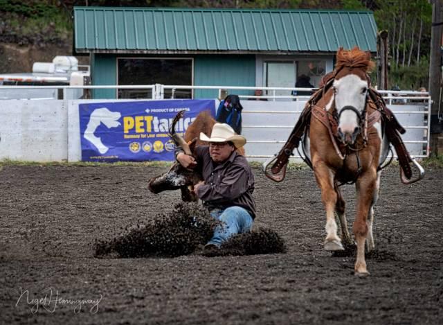 Steer-Wrestling-2 - Nigel Hemingway