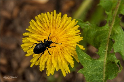 19 Bug-composite_4485 - Gloria Melnychuk