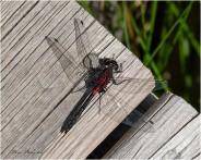 19 Bug - Gloria Melnychuk