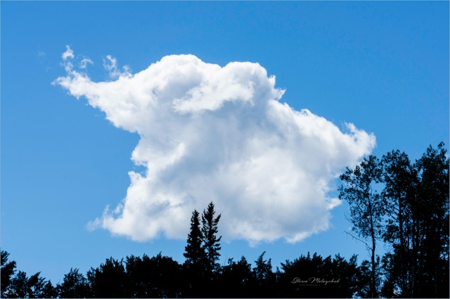 22 Cloud Shape of Animal (Olifant) - Gloria Melnychuk