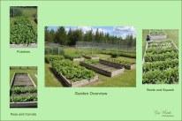#28 Something in a veggie garden- Gary Hardaker