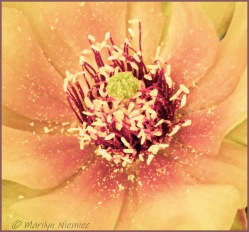 #9 Macro Some part of a plant - Marilyn Niemiec