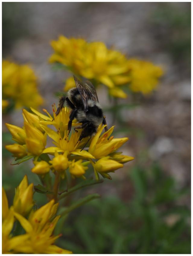 A Bumble Bees Snack,K.Haggkvist.jpg