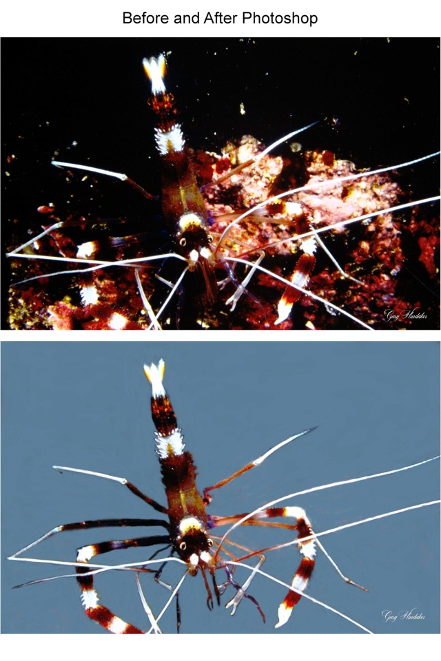 Barberpole Shrimp (before and after photoshop)- Gary Hardaker