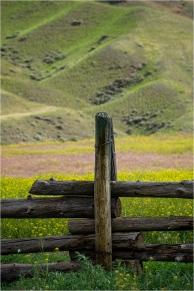 Cariboo Grassland - Daryl Bell