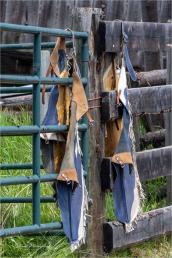 Cowboy Style - Gloria Melnychuk at 70th Annual Bridge Lake Rodeo (5392)
