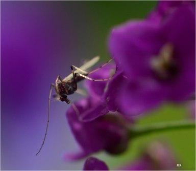#19 Bug - Diane Sullivan