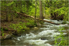 Eakin Creek-May 2019 - © Sharon Jensen