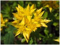 Flower,K.Haggkvist.jpg