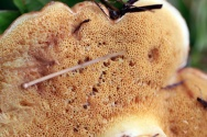 Fungi 20 Doug B