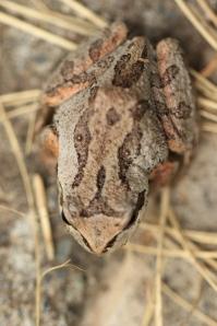 Living Frog 1 Doug B
